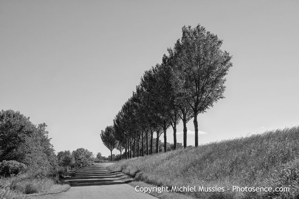 Monochrome print of Holland summer landscape in West Friesland, a dyke road with trees and a clear sky